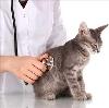 Ветеринарные клиники в Палкино